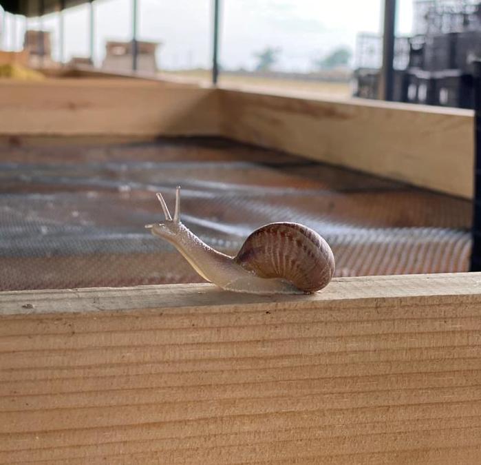 Равлики - новий сучасний делікатес