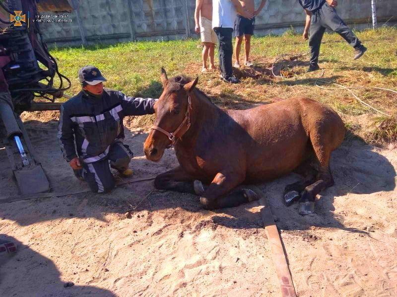Врятований кінь, фото ГУ ДСНС у Київській області